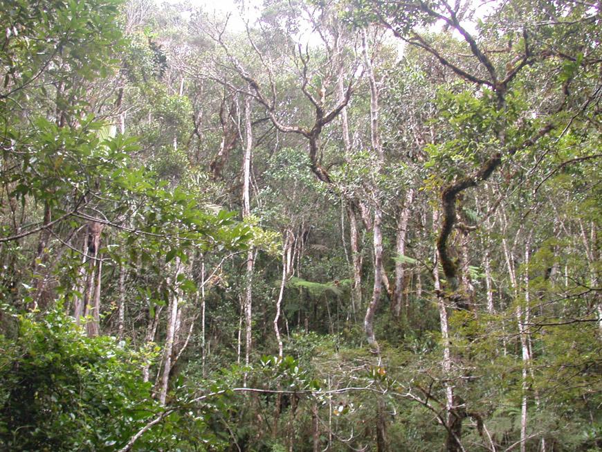 Aspect de la forêt primaire