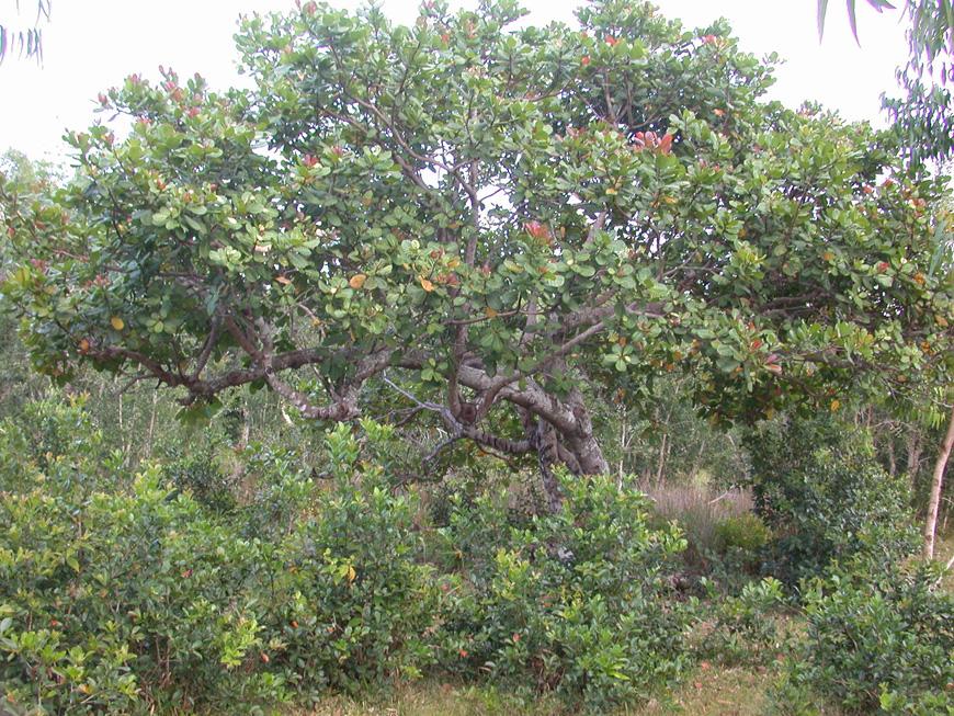 Un gros arbre au milieu du terrain