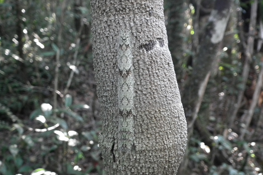 Mimétisme en forêt