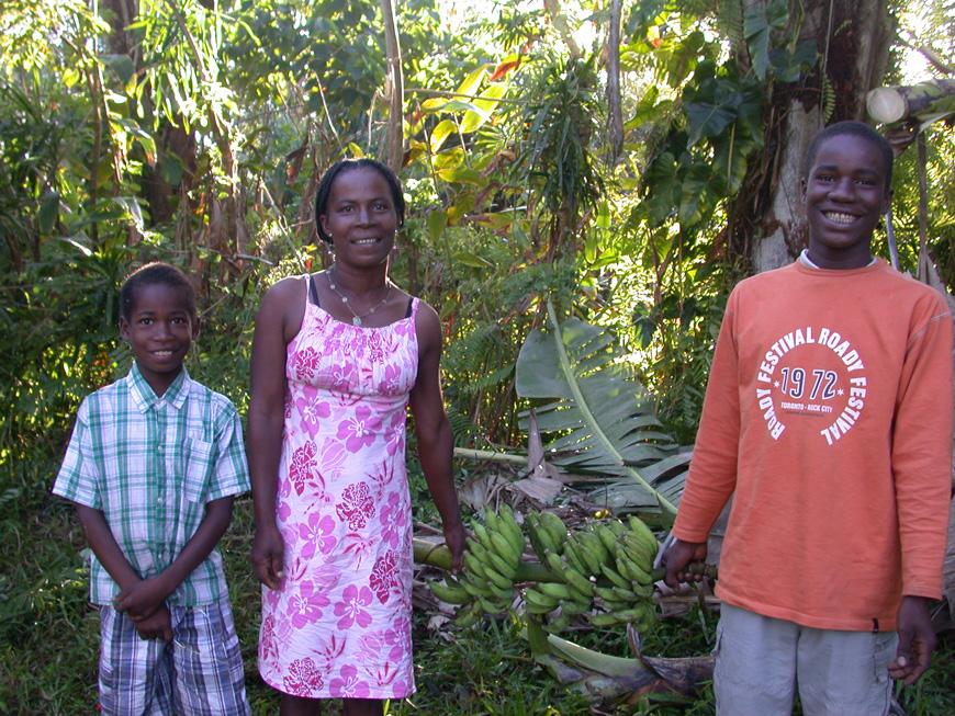 Récolte de bananes au jardin