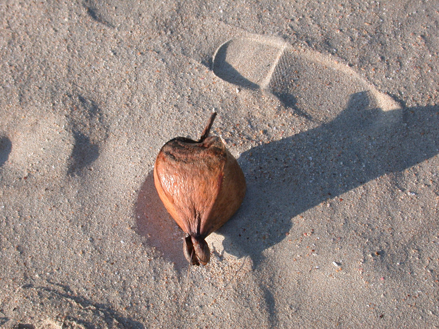 Fota be sur la plage