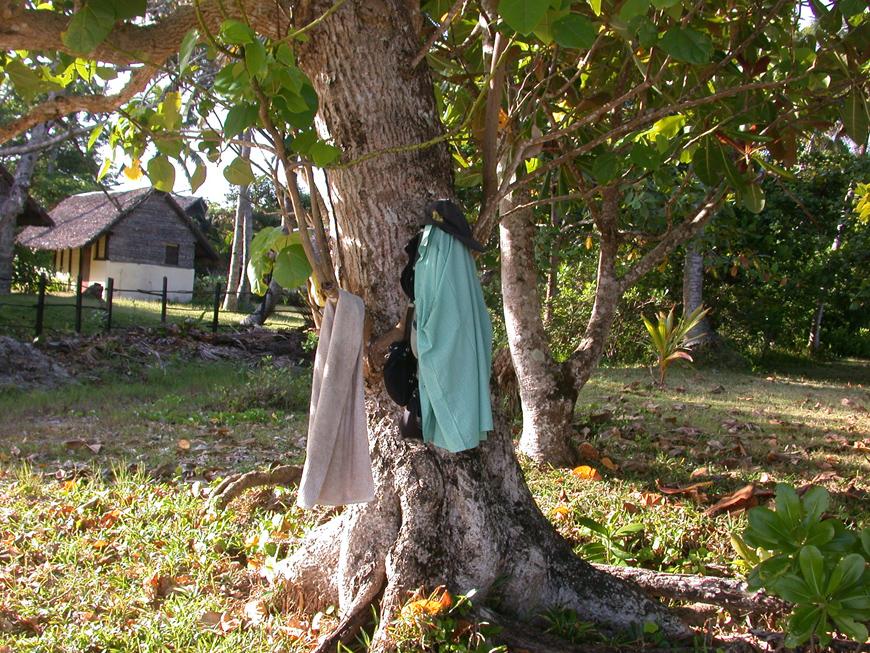 habits sur arbre