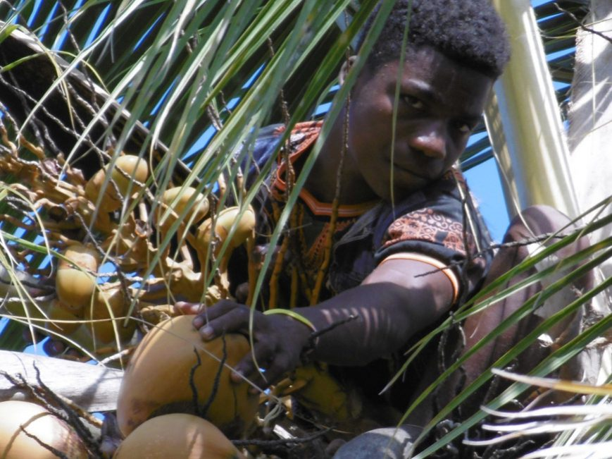 Kamisy en haut du cocotier