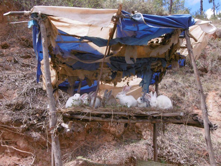 Lapins à vendre
