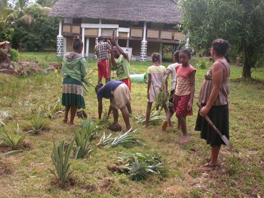 plantation d'ananas dans le jardin