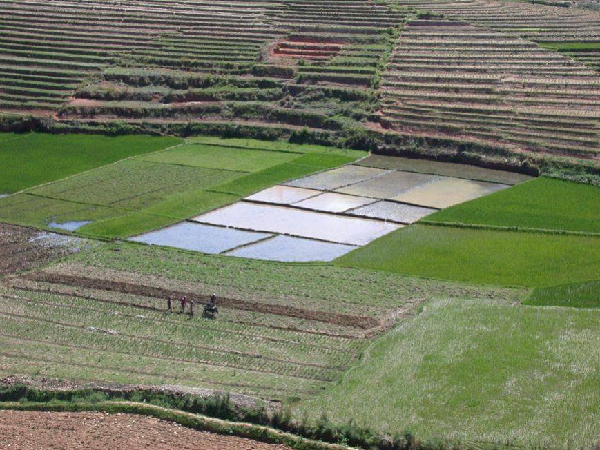 rizières le long de la RN7