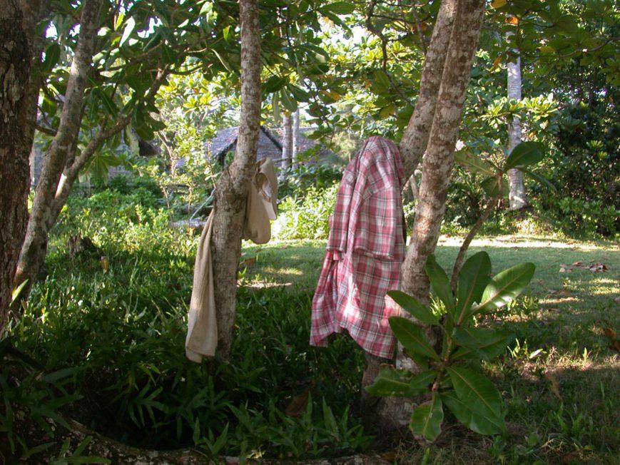 arbre de la plage